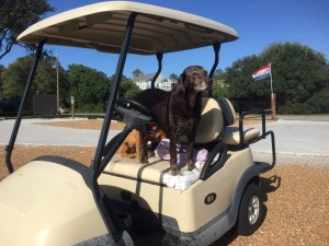 10-3-2016-stolen-golf-cart-duck